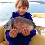 Actualités guide de pêche : Tour d'horizon de la pêche sur le bassin