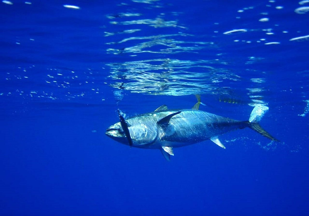 thon-atlantique-bassin